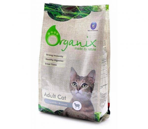 Как правильно кормить домашнего кота