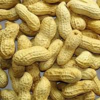 Когда убирают урожай арахиса