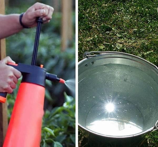 Нашатырный спирт: применение на огороде и в саду