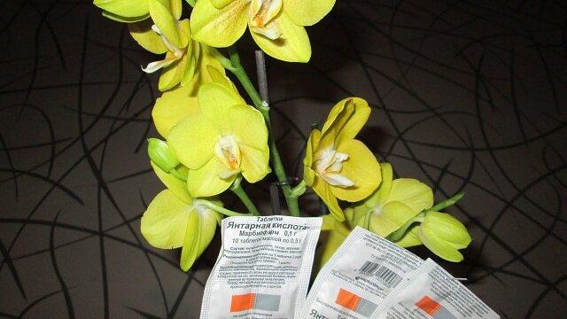 Применение янтарной кислоты для комнатных цветов: быстрое восстановление