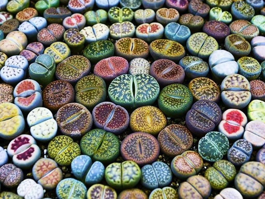 Литопсы – удивительные растения похожие на камни