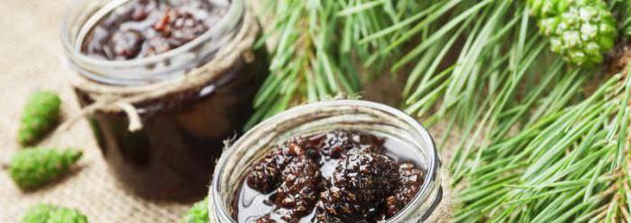 Варенье из сосновых шишек — как готовить варенье из шишек сосны