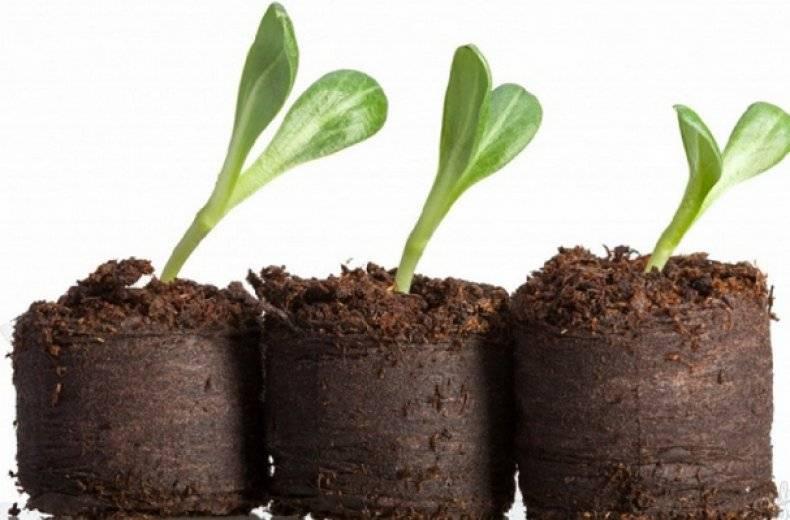 Правила использования торфяных таблеток для выращивания рассады