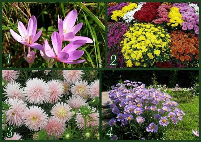 Растения для альпийской горки с названиями и фото