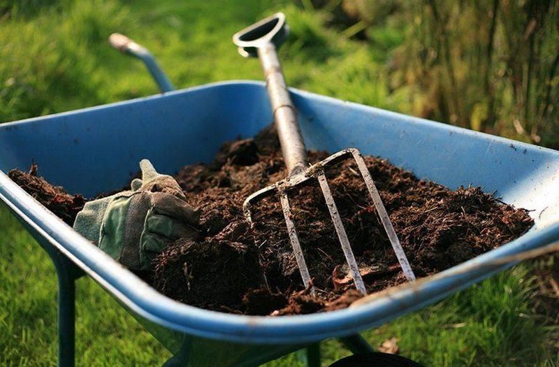 Чем подкормить грушу — как правильно подкармливать грушу для увеличения урожайности. 130 фото, советы и рекомендации по подкормке