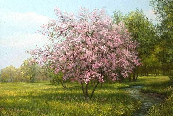 Абрикос на урале, посадка и уход, как получить богатый урожай
