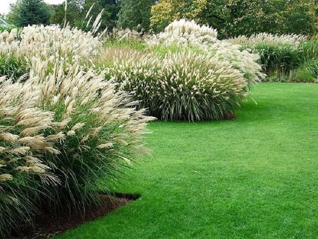 Использование растений и цветов для ландшафтного дизайна сада