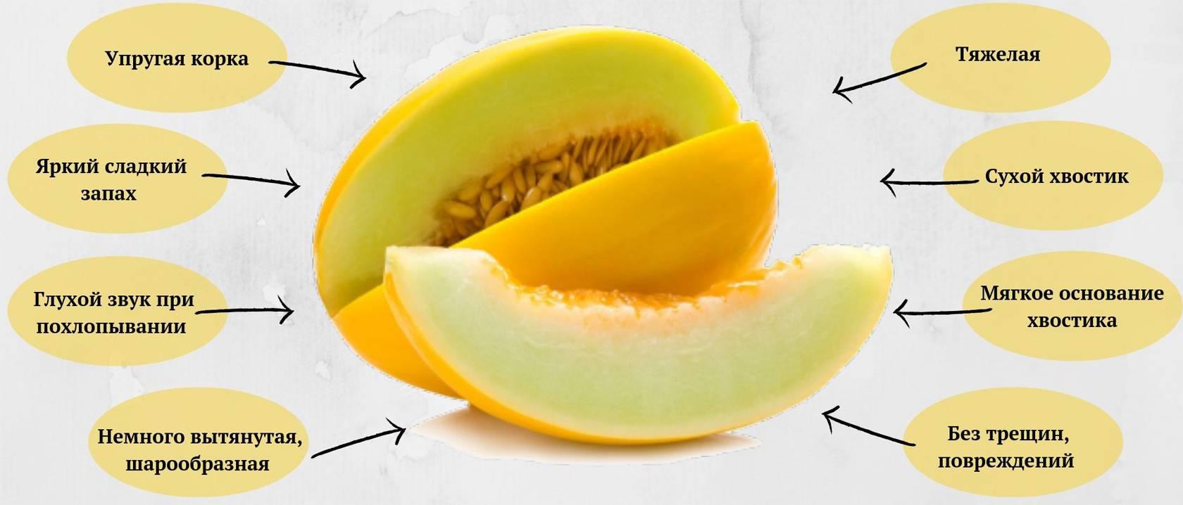 Дыня: полезные свойства, состав, калорийность продукта. польза дыни: для мужчин, женщин, детей, беременных, при похудении, грудном вскармливании. в чем заключается вред дыни?