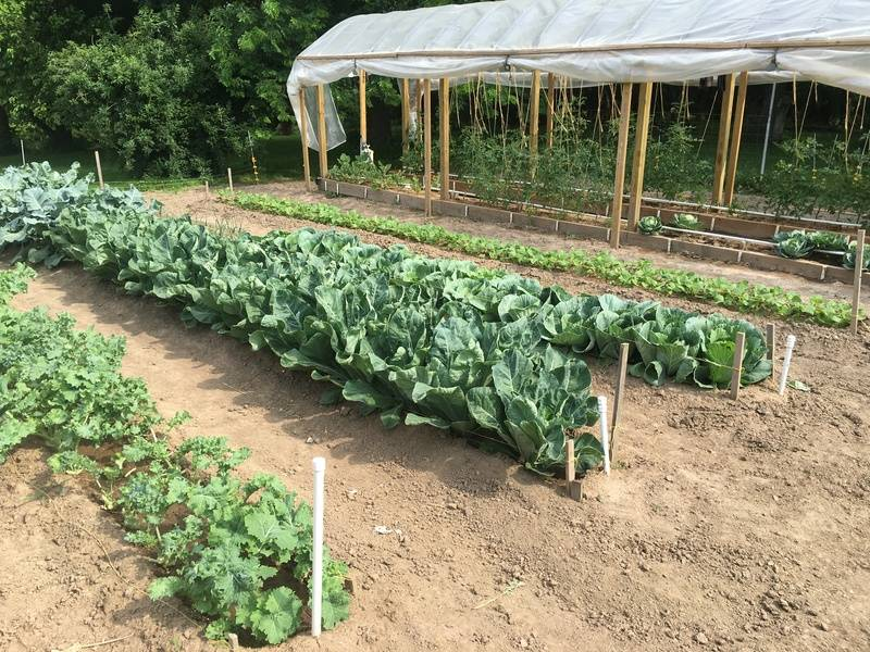 Николай курдюмов: сад и огород по-новому