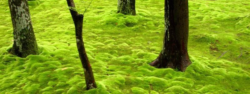 Появления мха на газоне: причины возникновения, как избавиться, эффективные средства борьбы со мхом