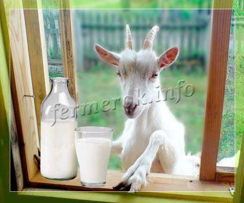 Какое количество молока можно получить от козы за день, месяц, год