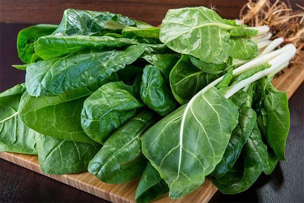 Сорта и особенности выращивания листовой свеклы мангольд