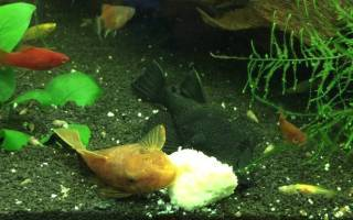 Самодельный корм для аквариумных рыбок