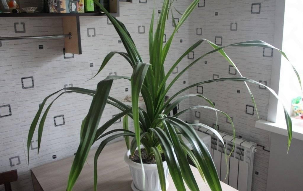 Комнатные растения фото и названия хрусталик является