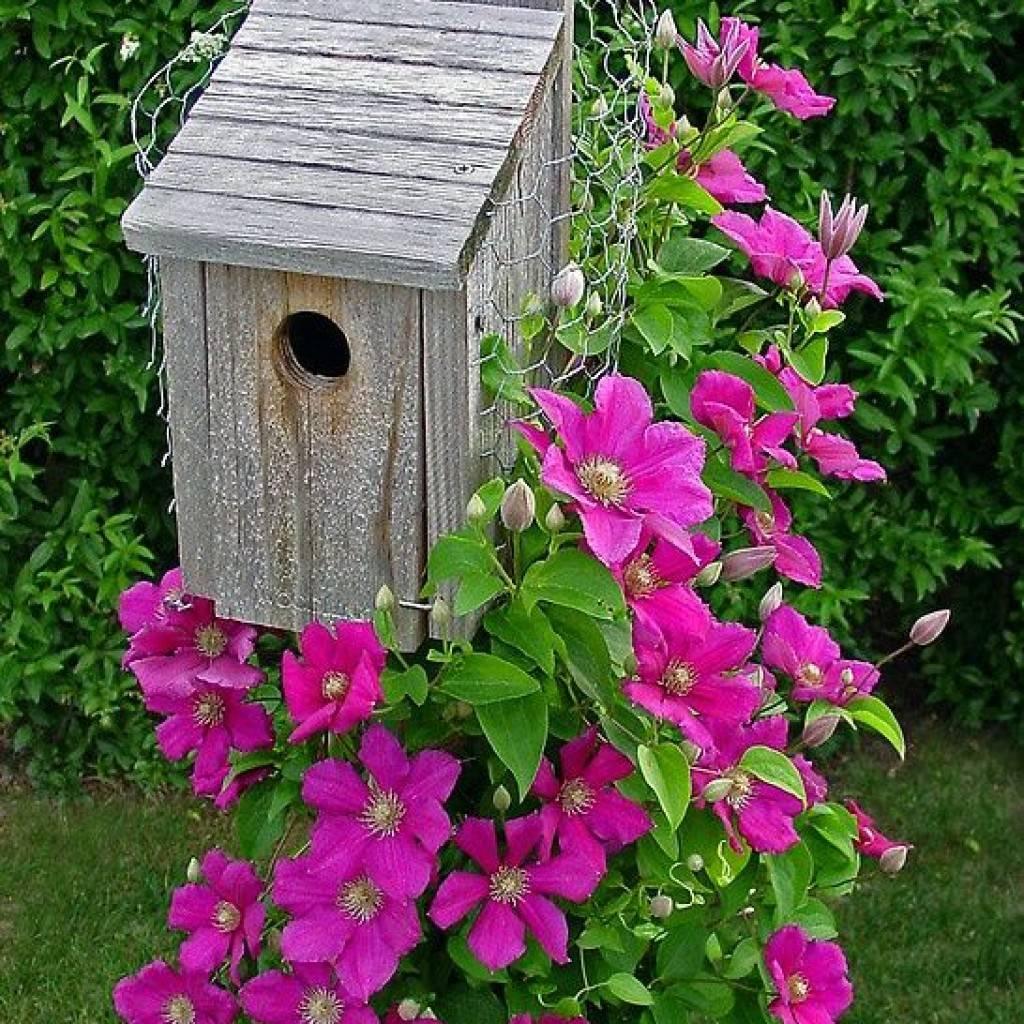 Как ухаживать за многолетниками после цветения