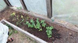 Выращивание рассады гороха