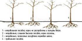 Посадка плодовых деревьев весной требует подготовки