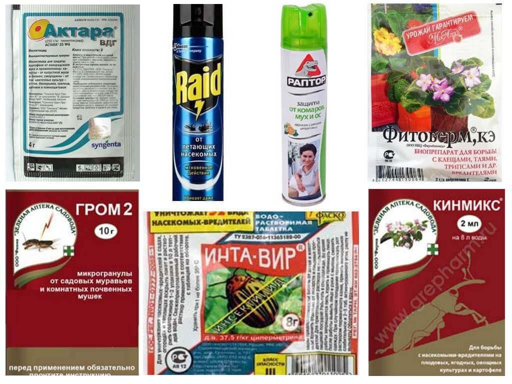 Как избавиться от мошек в комнатных цветах и предотвратить их появление