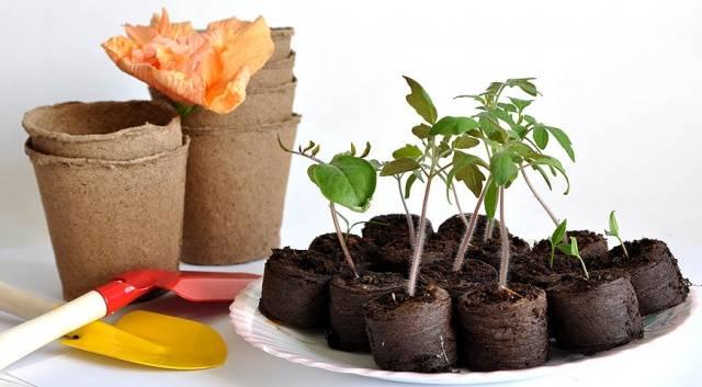 Торфяные горшочки для рассады: преимущества и недостатки, использование, изготовление