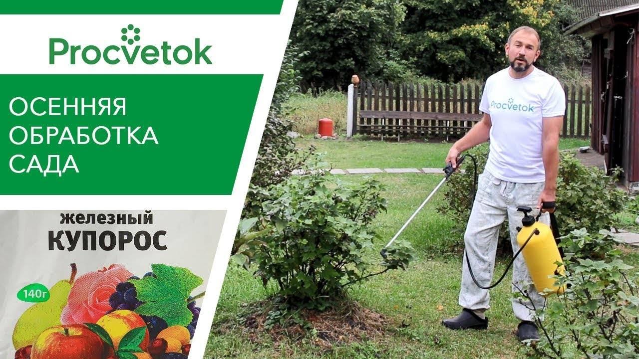 Железный купорос: применение в садоводстве