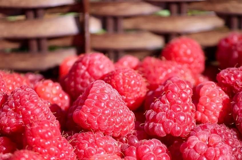 Советы начинающему ягодоводу или экономика малиновой плантации. часть первая