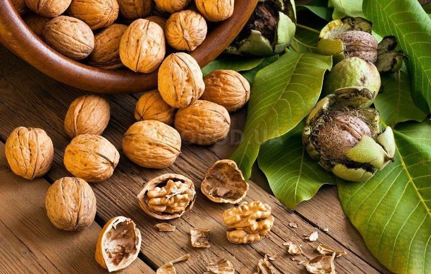 Состав, лечебные свойства, противопоказания и применение проверенного народного средства — листьев грецкого ореха