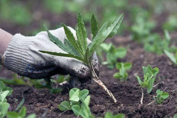 10 крутых способов избавиться от сорняков без химии