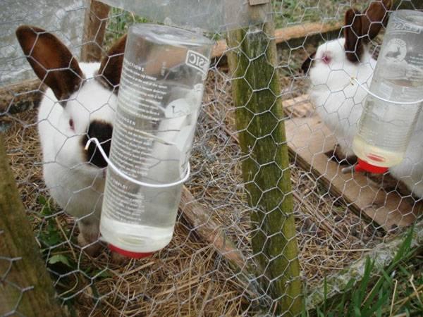 Выгоден ли бизнес по разведению кроликов