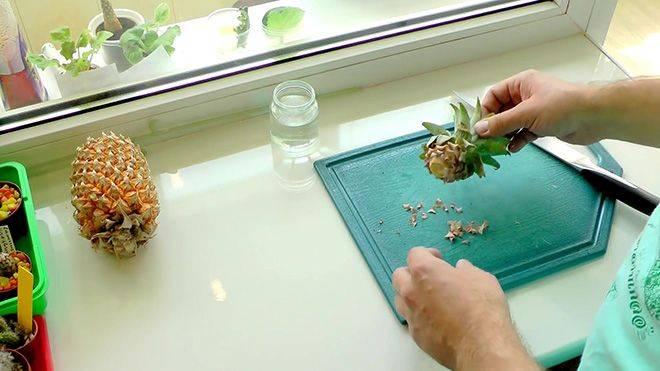 Как растет ананас — где растет и как его выращивать правильно своими руками быстро и просто (110 фото + видео)