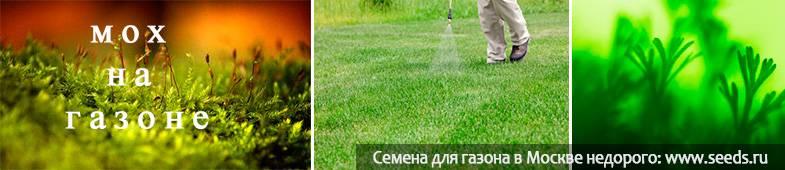 Борьба со мхом в саду и на огороде