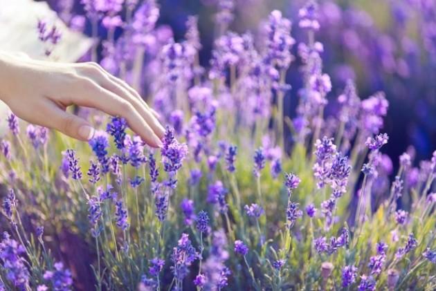 Лечебный дубравный шалфей – как вырастить растение на своем участке