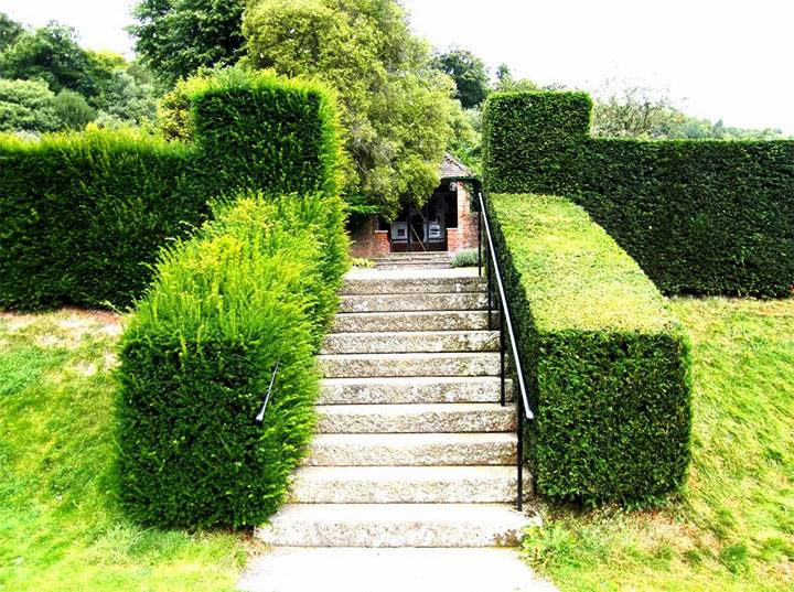 10 лучших идей из чего сделать живую изгородь