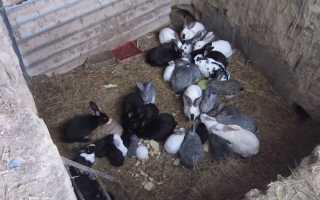 Шедовая система содержания кроликов — шеды для кроликов