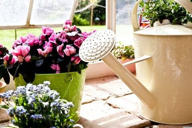 Удобрения для комнатных растений и цветов в домашних условиях: как приготовить