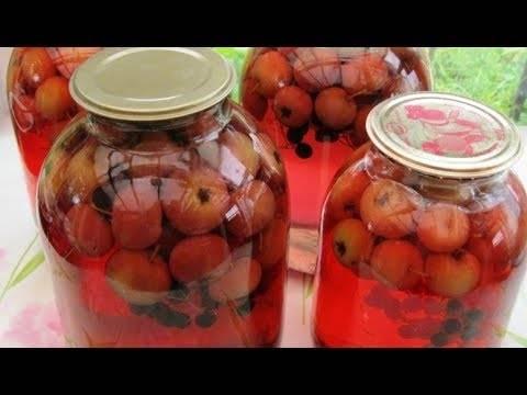 Компот из яблок из черноплодной рябины: 10 лучших рецептов приготовления на зиму
