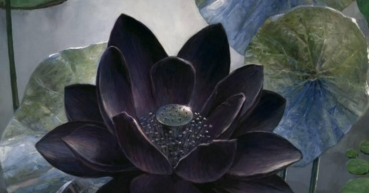 Незаменимое оружие в борьбе с невидимым врагом — трава вероника лекарственная. вероника лекарственная фото травы — свойства растения вероника