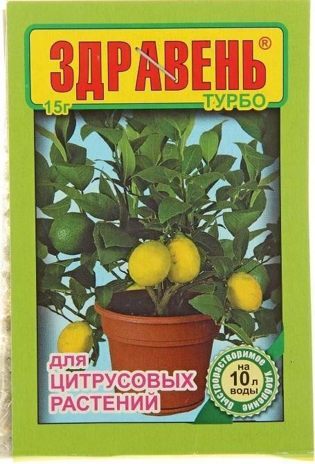Удобрение для цитрусовых в домашних условиях - видео