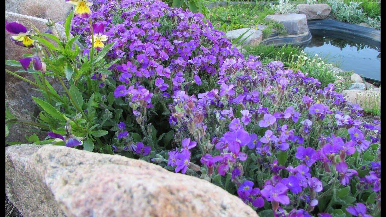 Выращивание обриеты: из одного семечка произойдет тысяча цветов