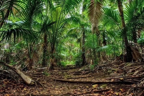 Семена пальмы: как из семечки вырастить роскошное тропическое деревце?