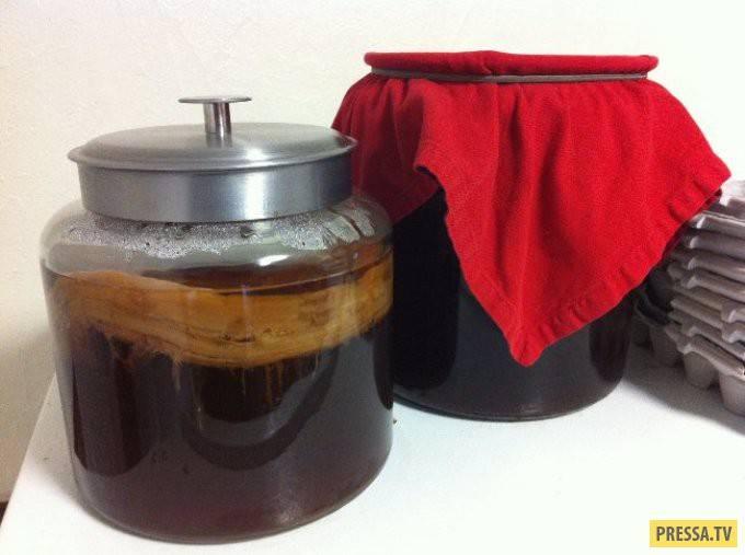 Чайный гриб: полезные свойства, противопоказания. как вырастить чайный гриб с нуля