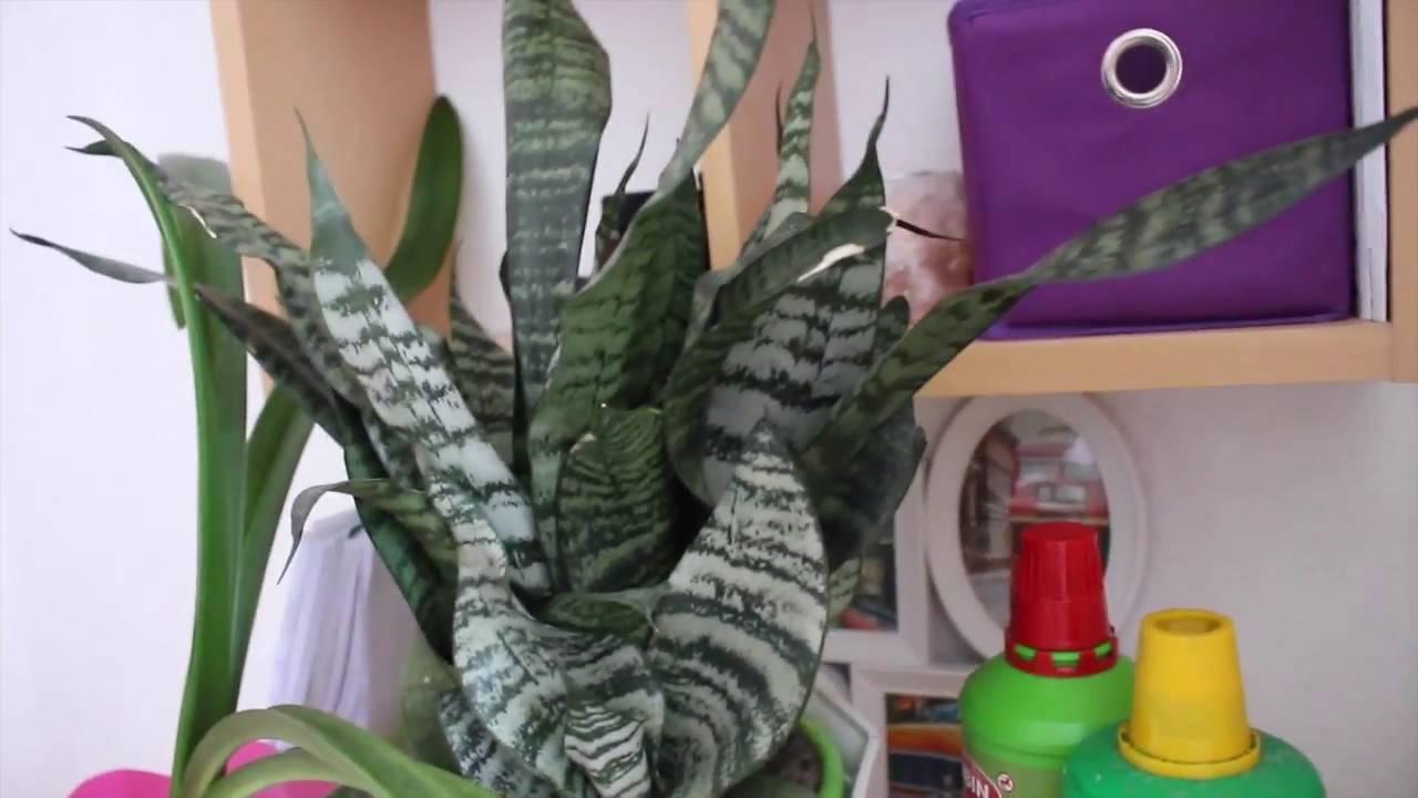 Секреты ухода за кактусами, чтобы они цвели