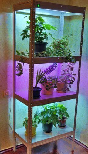 Дополнительное искусственное освещение цветов и растений в квартире