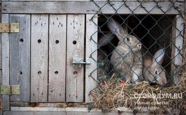 Вольерное содержание кроликов: плюсы и минусы, постройка вольера