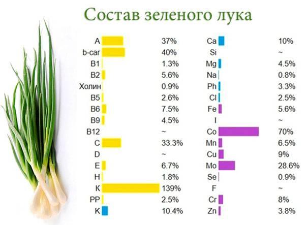 Зеленый и репчатый лук: польза и вред