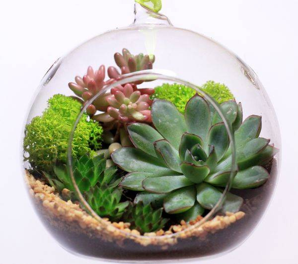 Как сделать флорариум своими руками: ёмкости, грунт, растения, уход