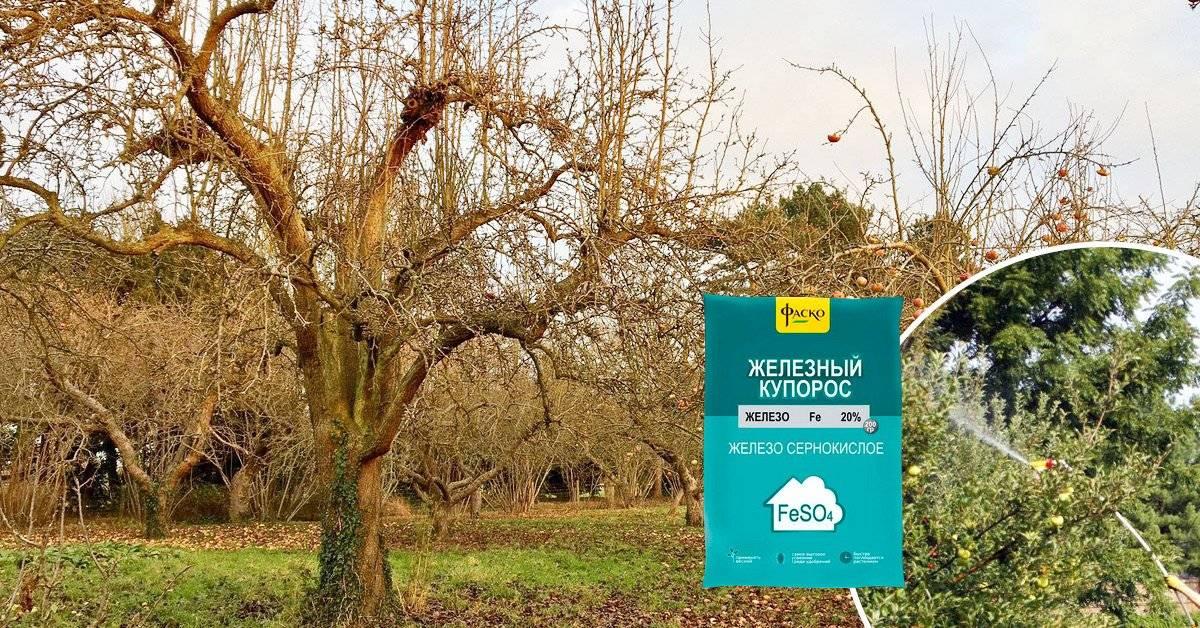 Обработка деревьев железным купоросом – инструкция по применению