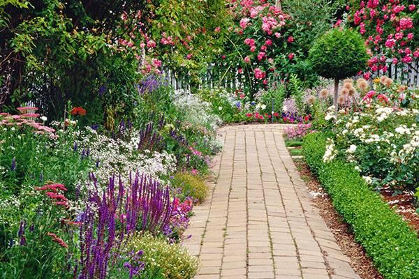 Перечник или иберис многолетний: посадка и уход, фото пушистого кустарника, выращивание растения с нежными маленькими цветками и приятным запахом