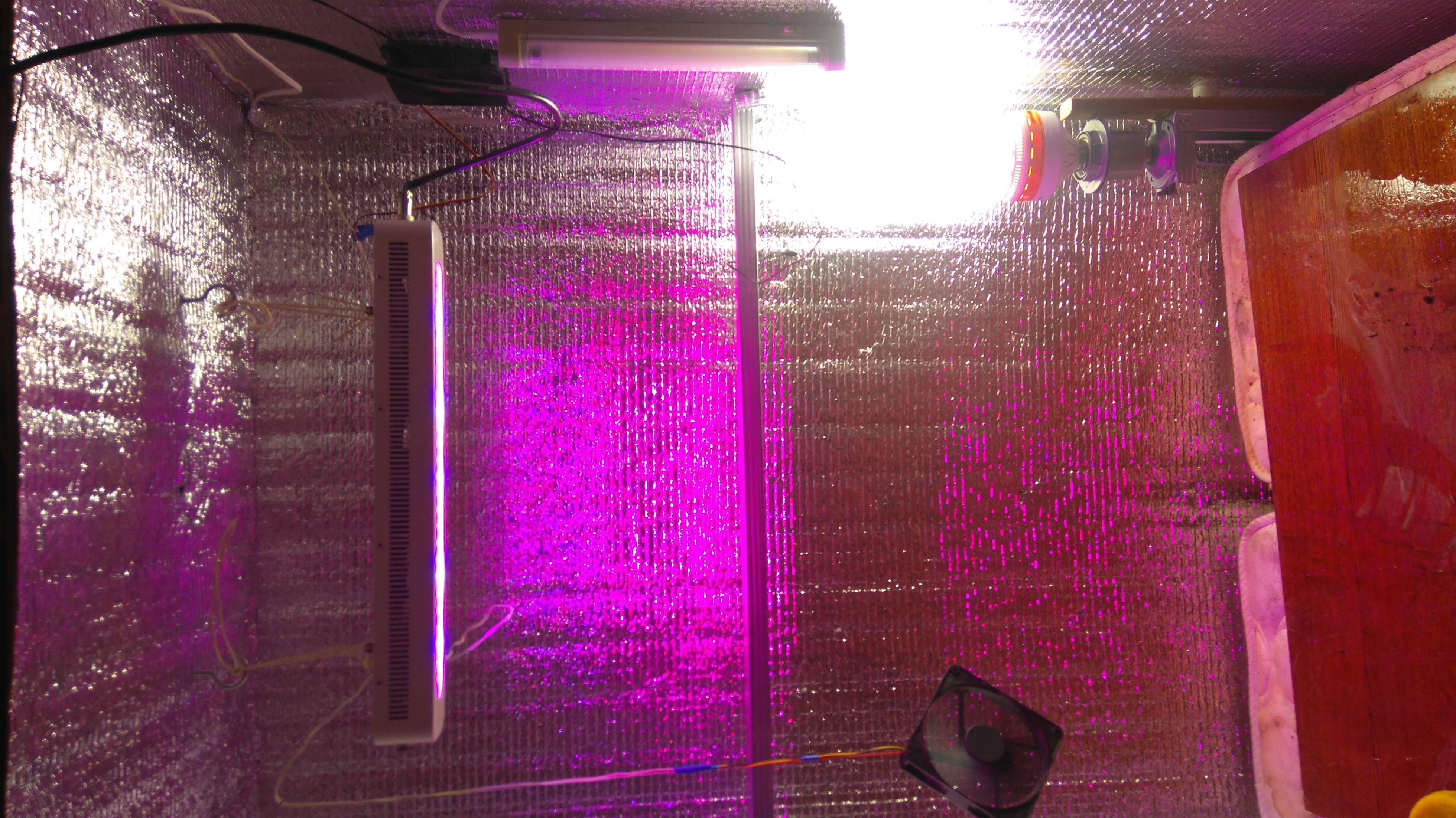 Как подобрать лампу для цветов и комнатных растений
