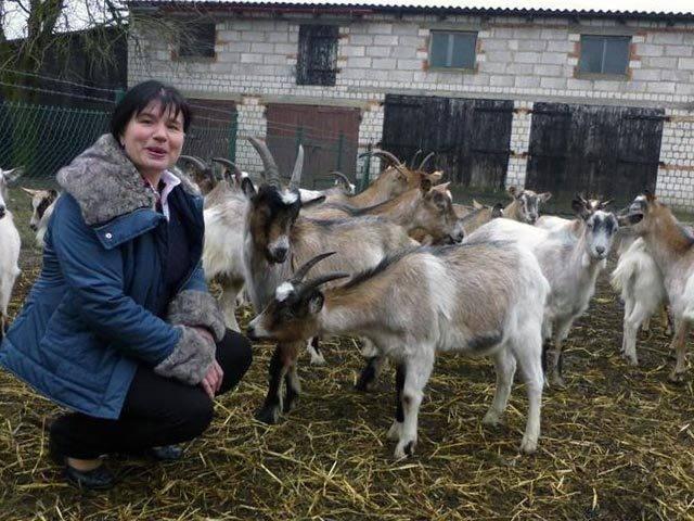 Можно ли назвать разведение коз отдыхом?