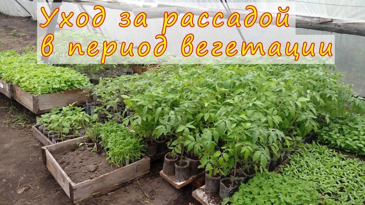 Вегетативный период у растений — срок, температура, видео